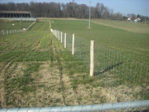 Schweineweide. Knotengitter-Zaun mit eingerammten Akazienpfosten.